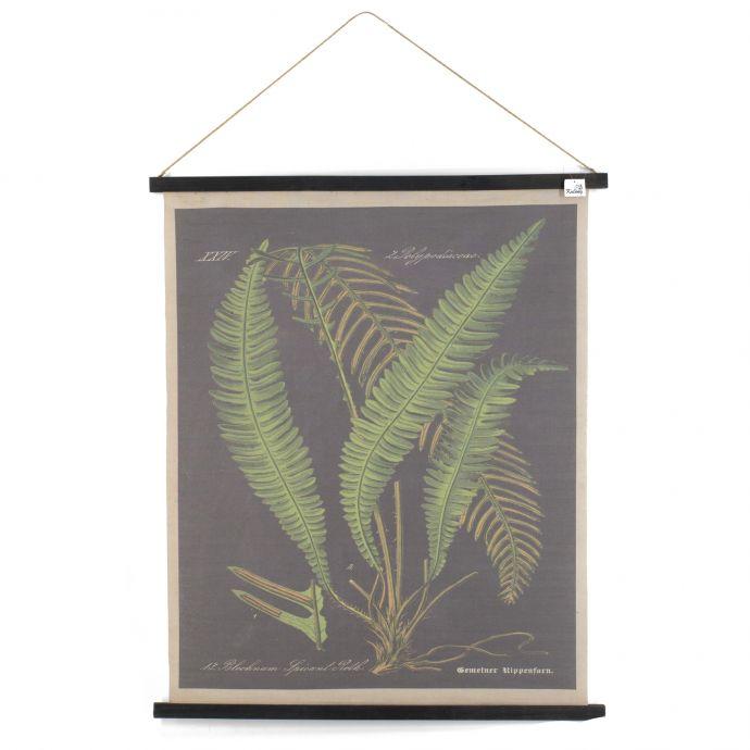 Fotokaart botanisch varens