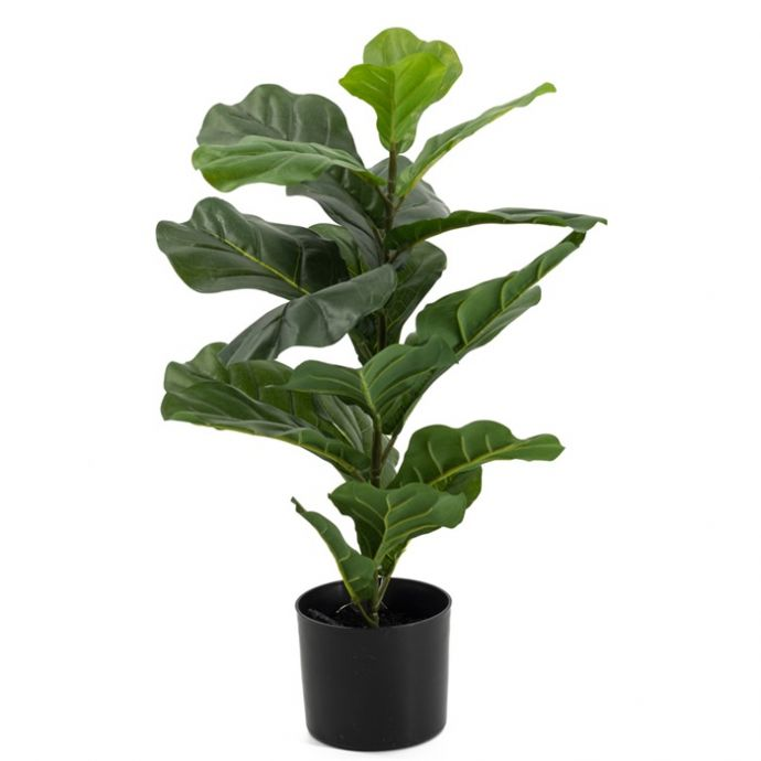 Vioolbladplant in pot kunst