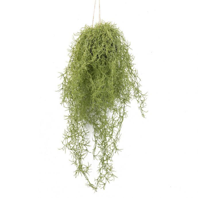 Airplant hangend kunst