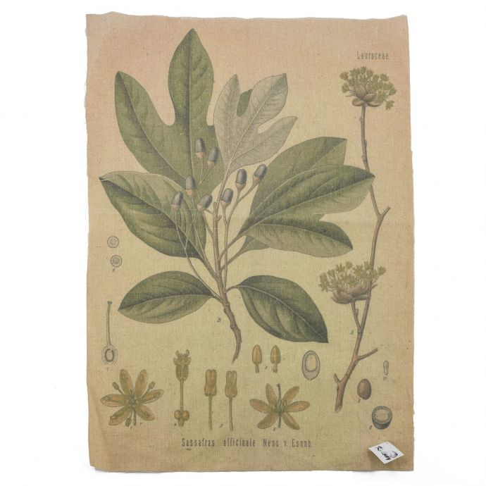 Shabby cloth plant