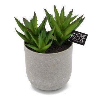 Vetplant kunst in pot
