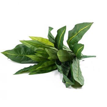 Bladplant